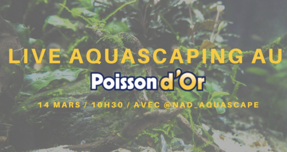 poisson d'or aquascaping